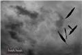 Fanfics / Fanfictions de Sussurro (Hush, Hush)