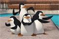 Styles de Os Pinguins de Madagascar