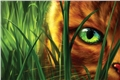 Fanfics / Fanfictions de Warrior Cats (Gatos Guerreiros)
