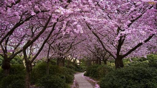 Fanfic / Fanfiction A primavera da esperança
