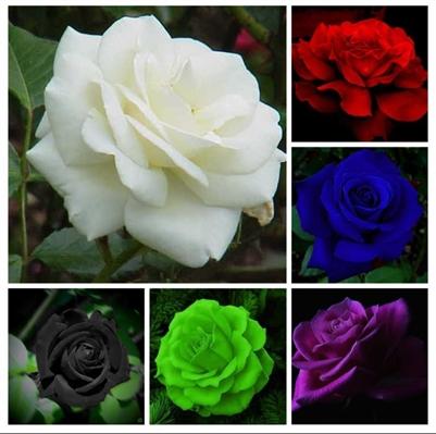 Fanfic / Fanfiction The Six Flowers