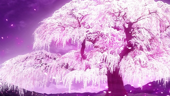 Fanfic / Fanfiction As pétalas das cerejeiras