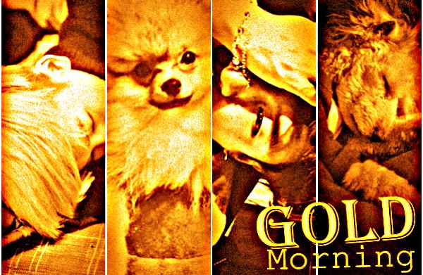 Fanfic / Fanfiction Gold Morning