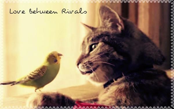 Fanfic / Fanfiction Love Between Rivals