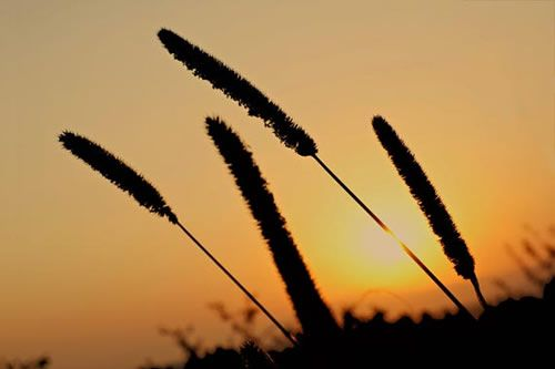 Fanfic / Fanfiction Nascer do Sol