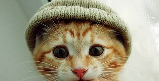Fanfic / Fanfiction O q os gatos sentem?..