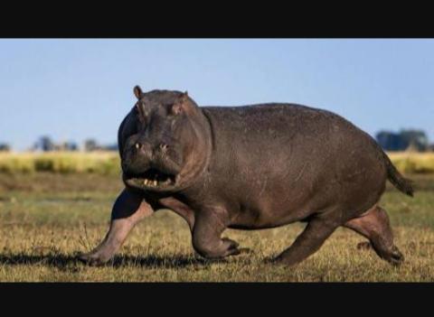 Fanfic / Fanfiction Hipopótamente Correto