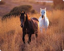 Fanfic / Fanfiction O cavalo hoseok, é a égua taerringui