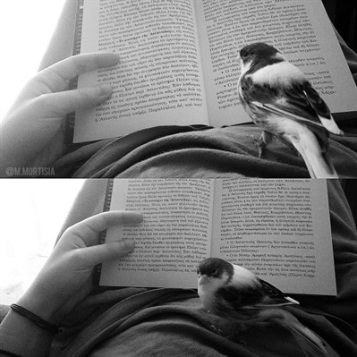 Fanfic / Fanfiction O Nada