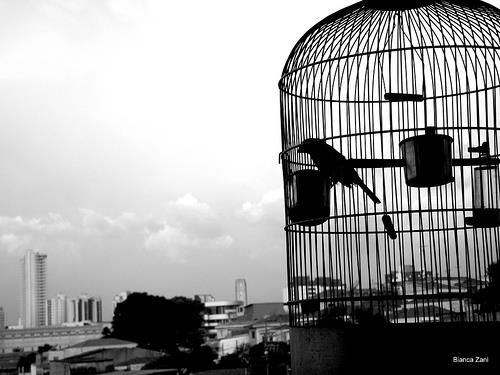 Fanfic / Fanfiction O pássaro