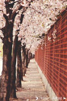 Fanfic / Fanfiction Primavera em Vermelho