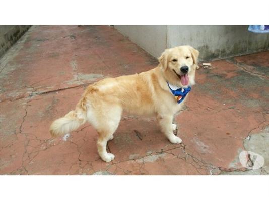 Fanfic / Fanfiction Vida de um cachorro temp. 2 - interativa