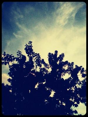 Fanfic / Fanfiction A árvore dos séculos