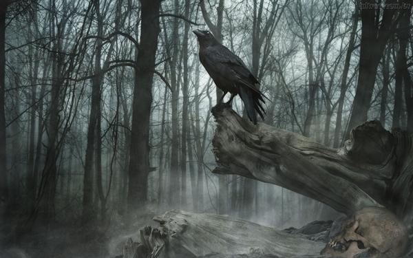 Fanfic / Fanfiction AM e a Floresta encantada, ou não
