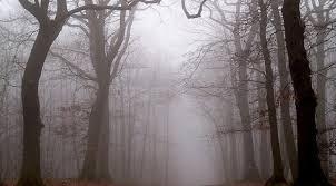 Fanfic / Fanfiction Aquela Floresta