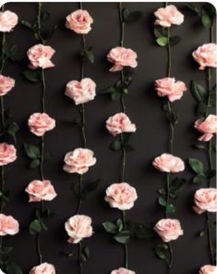 Fanfic / Fanfiction My beautiful roses