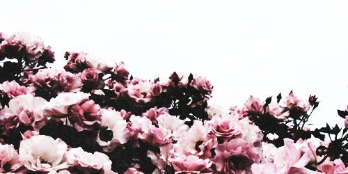 Fanfic / Fanfiction O jardim