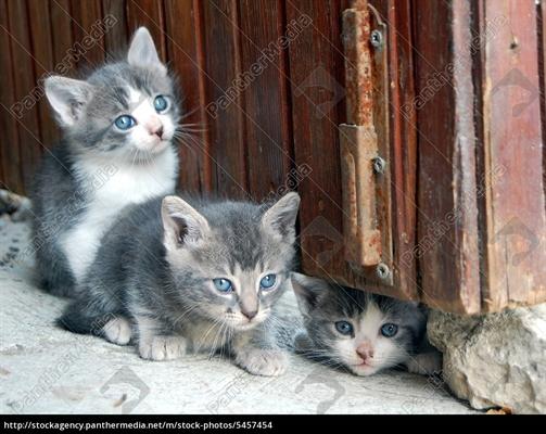 Fanfic / Fanfiction Os Três filhotes