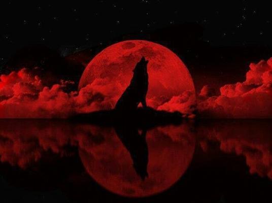 Fanfic / Fanfiction Uma loba apaixonada pelo proibido