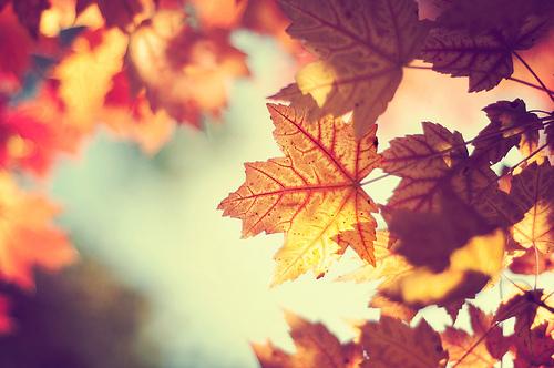 Fanfic / Fanfiction Folhas de Outono