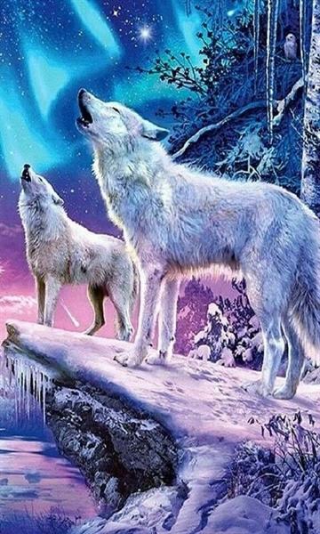 Fanfic / Fanfiction (Jikook ABO) o alfa lupus