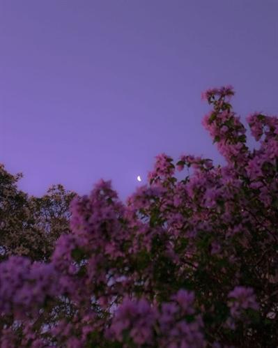 Fanfic / Fanfiction Sobre o belo céu noturno