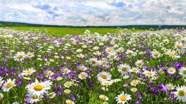 Fanfic / Fanfiction Flores do campo