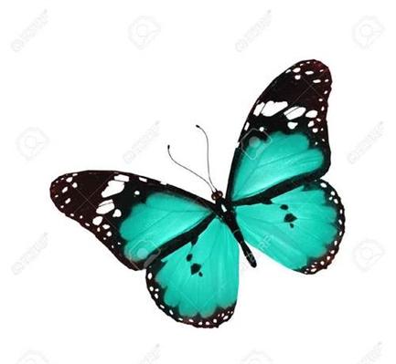 Fanfic / Fanfiction A menina dos sonhos - Capítulo 4 - Like a Butterfly