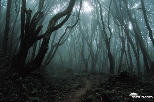Fanfic / Fanfiction A procura de Hanna - Capítulo 2 - A procura na floresta