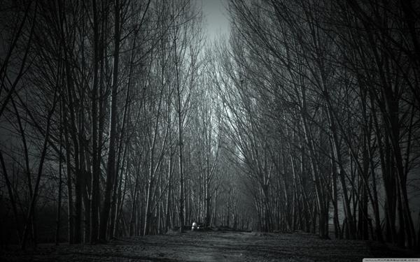 Fanfic / Fanfiction April e Alaska:O Vampiro e a Lobisomem - Capítulo 2 - Loba e Paixão