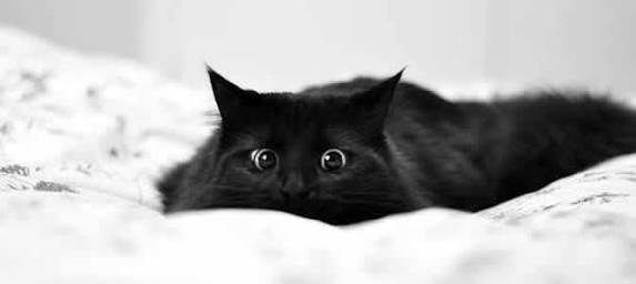 Fanfic / Fanfiction Meu Gato - Capítulo 2 - Me ajuda a vestir?