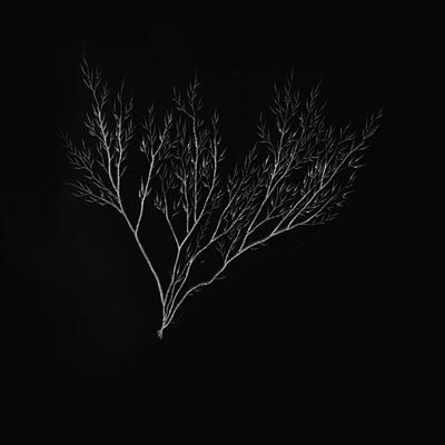 Fanfic / Fanfiction Midnight Red - Interativa - Capítulo 14 - Com Vocês, Acemax Black!
