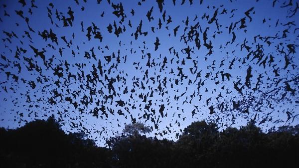 Fanfic / Fanfiction Mono e a Espada do Santuário - Capítulo 3 - Morcegos!