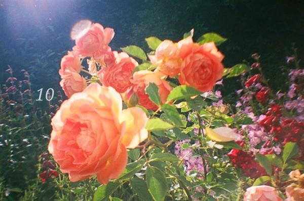 Fanfic / Fanfiction Noites de Ternura - ENCERRADA. - Capítulo 10 - Flor Que Corta