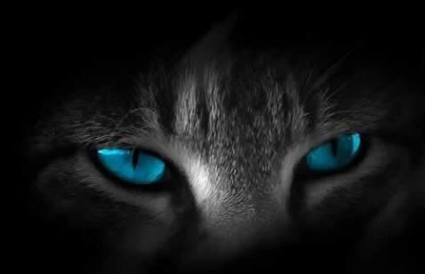 Fanfic / Fanfiction O gatinho de dois irmãos - Capítulo 2 - Surpresas