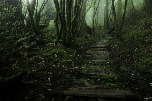Fanfic / Fanfiction Os Mistérios de Lightfield- Interativa - Capítulo 4 - Algo te persegue?