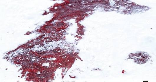 Fanfic / Fanfiction Uma futura piada - Capítulo 10 - Blood Forest