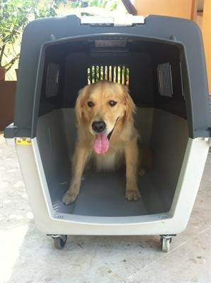 Fanfic / Fanfiction Vida de um cachorro - interativa - Capítulo 2 - Fui adotado!!!!