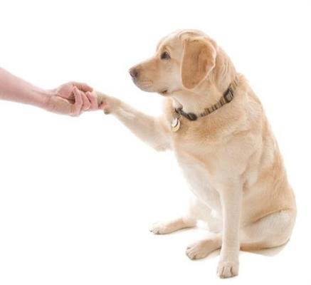 Fanfic / Fanfiction Vida de um cachorro - interativa - Capítulo 5 - Sendo adestrado