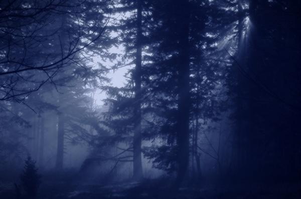 Fanfic / Fanfiction War Wolf - Capítulo 7 - Desvendar