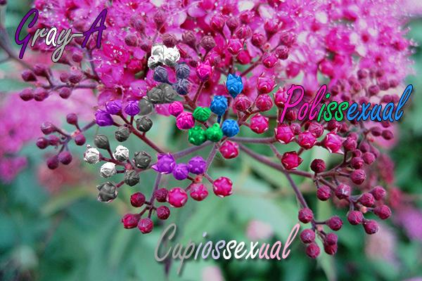 Fanfic / Fanfiction Amor próximo - Capítulo 37 - Capítulo 37 - Cupiossexual, gray-A, polissexual