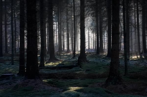 Fanfic / Fanfiction Aprimorados - Capítulo 1 - A floresta