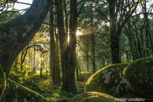 Fanfic / Fanfiction Castle of Illusion - Estrelando Kunpimook Bhuwakul - Capítulo 3 - A Floresta Encantada - Parte 1