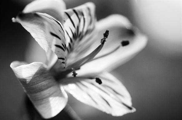 Fanfic / Fanfiction Flor de Natal - Capítulo 1 - Capítulo Único