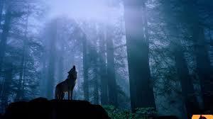 Fanfic / Fanfiction My Wolf - Capítulo 7 - 7- Lua Crescente