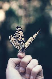 Fanfic / Fanfiction Prisoner - Capítulo 67 - Butterfly - temp.2