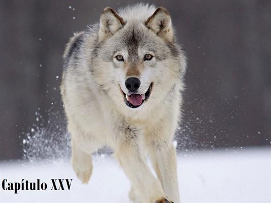Fanfic / Fanfiction She Wolf - Capítulo 25 - Capítulo XXV