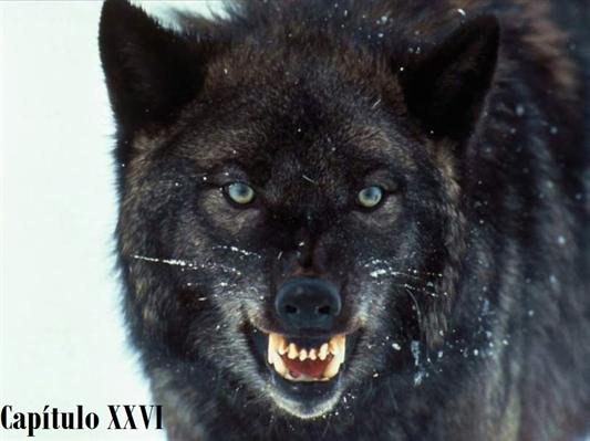 Fanfic / Fanfiction She Wolf - Capítulo 26 - Capítulo XXVI
