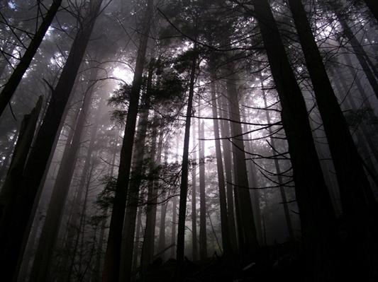 Fanfic / Fanfiction The Chosen One - Capítulo 4 - Passeio na floresta