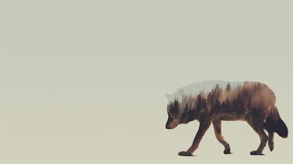 Fanfic / Fanfiction Uma historia de lobos e magia que eu chamo de moon wolves - Capítulo 2 - Capitulo 1: Bem vindos a minha toca!